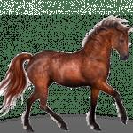 caballo, pablo adan, animales, marca personal