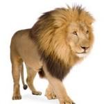 me identifico con un leon, pablo adan, animales, marca personal