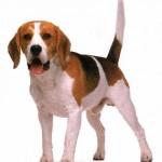 me identifico con un perro, marca personal, animales